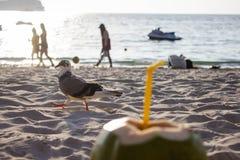 Φρέσκια πράσινη καρύδα με έναν σωλήνα στην άσπρη άμμο στην παραλία στην Ταϊλάνδη o στοκ φωτογραφία με δικαίωμα ελεύθερης χρήσης