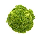 φρέσκια πράσινη μικτή σαλάτα Στοκ Φωτογραφίες