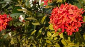 Φρέσκια πράσινη πυράκτωση λουλουδιών το βράδυ Στοκ εικόνες με δικαίωμα ελεύθερης χρήσης