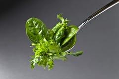 Φρέσκια πράσινη σαλάτα με το σπανάκι, το arugula και το μαρούλι Στοκ Εικόνες