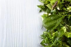 Φρέσκια πράσινη σαλάτα με το σπανάκι, το arugula και το μαρούλι Στοκ φωτογραφία με δικαίωμα ελεύθερης χρήσης