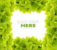 φρέσκια πράσινη σαλάτα πλα&io Στοκ εικόνες με δικαίωμα ελεύθερης χρήσης