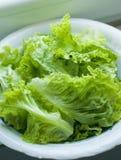 φρέσκια πράσινη σαλάτα Στοκ Εικόνα