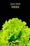 φρέσκια πράσινη σαλάτα Στοκ Εικόνες