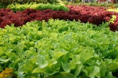 φρέσκια πράσινη σαλάτα μαρ&omicr Στοκ εικόνα με δικαίωμα ελεύθερης χρήσης