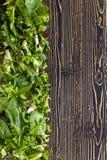 Φρέσκια πράσινη σαλάτα με το σπανάκι, το arugula και το μαρούλι Στοκ εικόνα με δικαίωμα ελεύθερης χρήσης