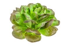 Φρέσκια πράσινη σαλάτα που απομονώνεται στο άσπρο υπόβαθρο Στοκ Φωτογραφίες