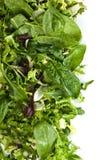 Φρέσκια πράσινη σαλάτα που απομονώνεται στο άσπρο υπόβαθρο Στοκ φωτογραφία με δικαίωμα ελεύθερης χρήσης