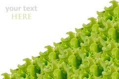 Φρέσκια πράσινη σαλάτα που απομονώνεται Στοκ φωτογραφία με δικαίωμα ελεύθερης χρήσης