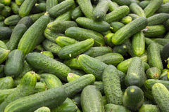 Φρέσκια πράσινη συλλογή αγγουριών υπαίθρια στη μακροεντολή αγοράς. Στοκ Εικόνες