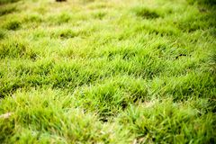 Φρέσκια πράσινη τεχνητή σύσταση χλόης και Στοκ εικόνα με δικαίωμα ελεύθερης χρήσης