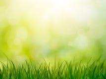 φρέσκια πράσινη υγιής άνοιξη χλόης Στοκ Φωτογραφίες