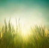 φρέσκια πράσινη υγιής άνοιξη χλόης Στοκ εικόνα με δικαίωμα ελεύθερης χρήσης