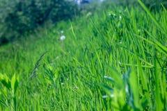 φρέσκια πράσινη υγιής άνοιξη χλόης Στοκ εικόνες με δικαίωμα ελεύθερης χρήσης
