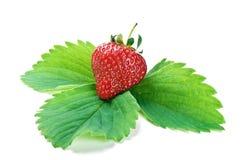 φρέσκια πράσινη φράουλα φύ&lambda Στοκ Φωτογραφίες