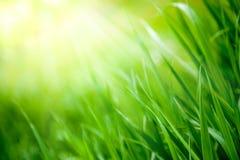 Φρέσκια πράσινη χλόη ανοίξεων στοκ εικόνες