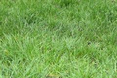 Φρέσκια πράσινη χλόη μετά από τη βροχή στα ξημερώματα στοκ εικόνα