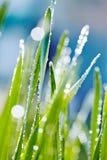 Φρέσκια πράσινη χλόη με τη δροσιά στοκ φωτογραφία με δικαίωμα ελεύθερης χρήσης