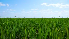 Φρέσκια πράσινη χλόη στον τομέα φιλμ μικρού μήκους