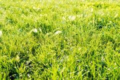 Φρέσκια πράσινη χλόη στο άμεσο φως του ήλιου Στοκ φωτογραφία με δικαίωμα ελεύθερης χρήσης