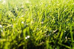 Φρέσκια πράσινη χλόη στο άμεσο φως του ήλιου Στοκ Εικόνες