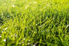 Φρέσκια πράσινη χλόη στο άμεσο φως του ήλιου Στοκ Εικόνα