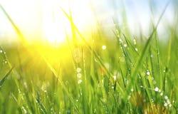 Φρέσκια πράσινη χλόη άνοιξη με τις πτώσεις δροσιάς