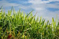 Φρέσκια πράσινη χλόη με μια αντανάκλαση ουρανού και σύννεφων Στοκ φωτογραφία με δικαίωμα ελεύθερης χρήσης