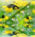 Φρέσκια πράσινη χλόη με τις πτώσεις και την πεταλούδα δροσιάς Στοκ Εικόνες