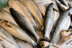 φρέσκια πώληση ψαριών Στοκ φωτογραφία με δικαίωμα ελεύθερης χρήσης