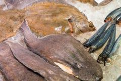 φρέσκια πώληση πάγου ψαριών Στοκ Εικόνες