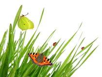 Δροσιά με τις πεταλούδες και ladybugs στοκ φωτογραφία με δικαίωμα ελεύθερης χρήσης