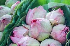 Φρέσκια ρόδινη ανθοδέσμη λουλουδιών λωτού στοκ φωτογραφίες με δικαίωμα ελεύθερης χρήσης