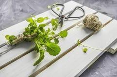 Φρέσκια σαλάτα κάρδαμου σαλάτας arugula και σαλάτα μωρών με το μεγάλο εκλεκτής ποιότητας ψαλίδι στην ξύλινη επιφάνεια του κιβωτίο στοκ φωτογραφία