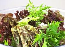 φρέσκια σαλάτα Στοκ εικόνες με δικαίωμα ελεύθερης χρήσης