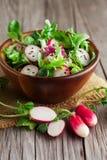 Φρέσκια σαλάτα με τα ραδίκια Στοκ φωτογραφία με δικαίωμα ελεύθερης χρήσης