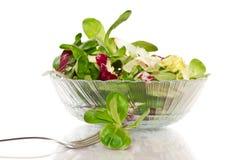 Φρέσκια σαλάτα με το arugula Στοκ εικόνες με δικαίωμα ελεύθερης χρήσης