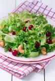 Φρέσκια σαλάτα Frisee στοκ εικόνα