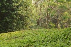 Φρέσκια σκηνή λιβαδιών χλόης με το πράσινο χρώμα στοκ εικόνες με δικαίωμα ελεύθερης χρήσης