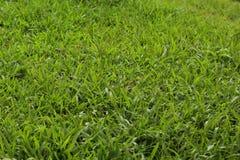 Φρέσκια σκηνή λιβαδιών χλόης με το πράσινο χρώμα στοκ φωτογραφία με δικαίωμα ελεύθερης χρήσης