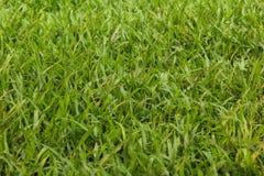 Φρέσκια σκηνή λιβαδιών χλόης με το πράσινο χρώμα στοκ φωτογραφίες