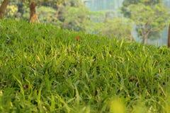 Φρέσκια σκηνή λιβαδιών χλόης με το πράσινο χρώμα στοκ εικόνες
