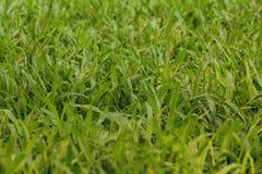 Φρέσκια σκηνή λιβαδιών χλόης με το πράσινο χρώμα στοκ εικόνα με δικαίωμα ελεύθερης χρήσης