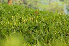 Φρέσκια σκηνή λιβαδιών χλόης με το πράσινο χρώμα στοκ φωτογραφία