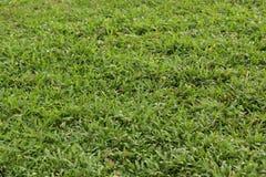 Φρέσκια σκηνή λιβαδιών χλόης με το πράσινο χρώμα στοκ φωτογραφίες με δικαίωμα ελεύθερης χρήσης