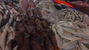 Φρέσκια σύλληψη των ψαριών και του αστακού απόθεμα βίντεο