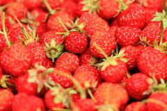 φρέσκια σύσταση φραουλών Στοκ φωτογραφίες με δικαίωμα ελεύθερης χρήσης