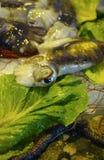 Φρέσκια σύλληψη fisherman's του ακατέργαστου καλαμαριού από το Αιγαίο πέλαγος, Σικελία, Στοκ φωτογραφίες με δικαίωμα ελεύθερης χρήσης
