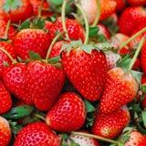 φρέσκια τέλεια ώριμη φράουλα Στοκ φωτογραφίες με δικαίωμα ελεύθερης χρήσης
