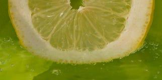 φρέσκια φέτα λεμονιών κίτρινη Στοκ Εικόνες